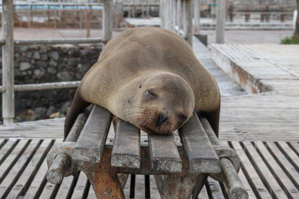 ozone sauna sleep deprivation